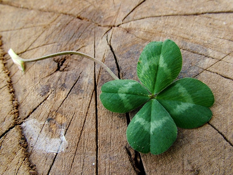 Luck vs. Persistence: Which is More Important to Make a Living Online?